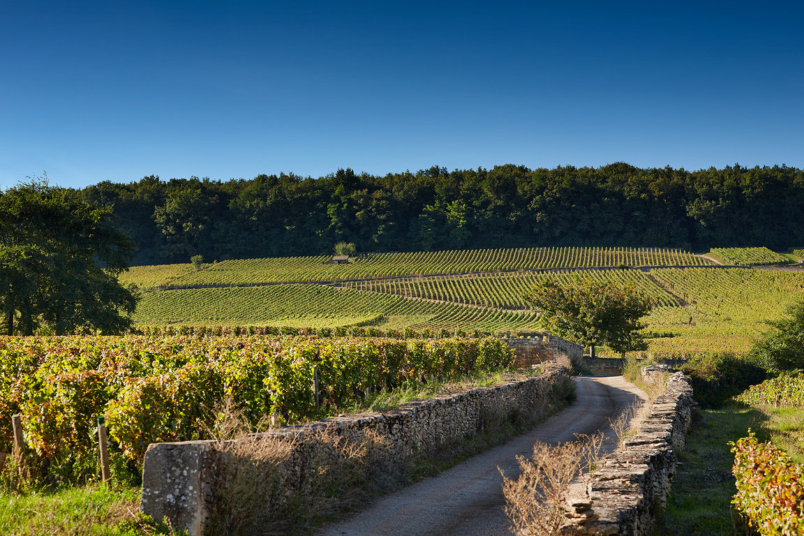 Corton Vineyards